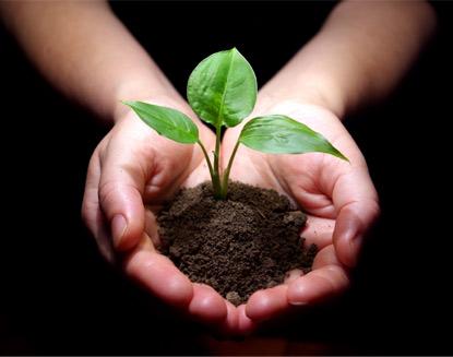 hands_soil